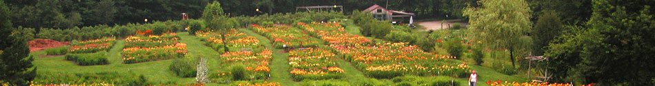 page specific keywords from Olallie Daylily Gardens