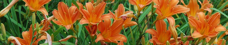 Orange-mass-